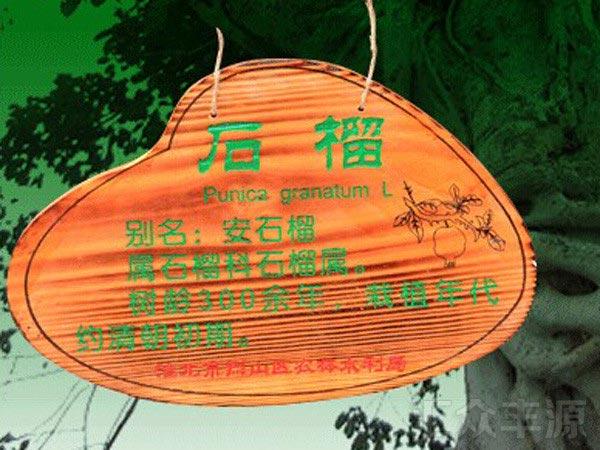 CDP52草地牌